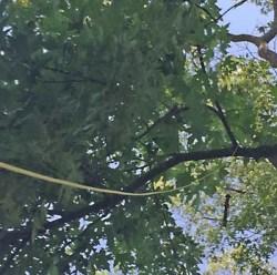 Stick on branch